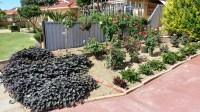 Iansgarden1's Edible Backyard