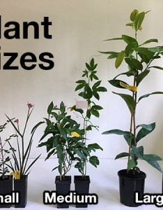 Plant pot size also forestry tube ft  nbsp small rh daleysfruit