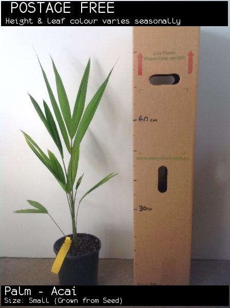 How Plant Above Ground Garden