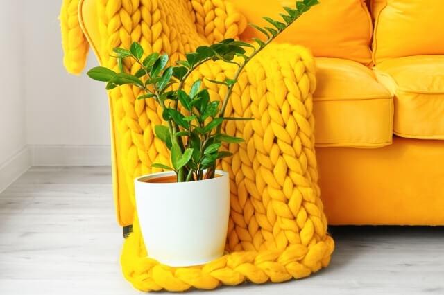 Plantada Kamerplanten Vloerverwarming