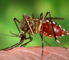 Növényekkel a szúnyogok ellen 4. 5 (1)
