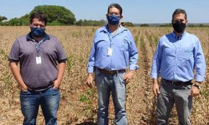 Assentamento rural colhe cultivar de soja orgânica da Embrapa