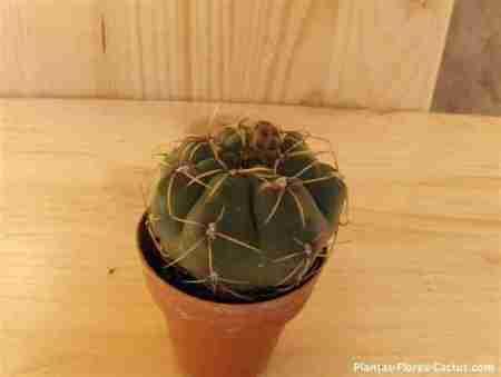 Guia para Trasplantar un cactus