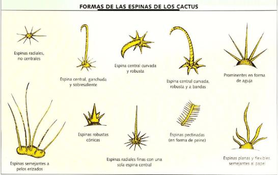 Como sacar espinas de cactus