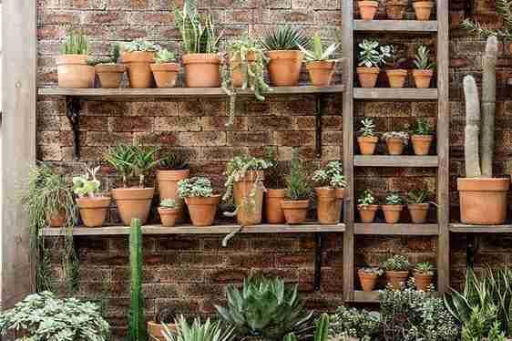 ¿Los cactus son 100% sol? Te lo explico en 10 segundos. 1