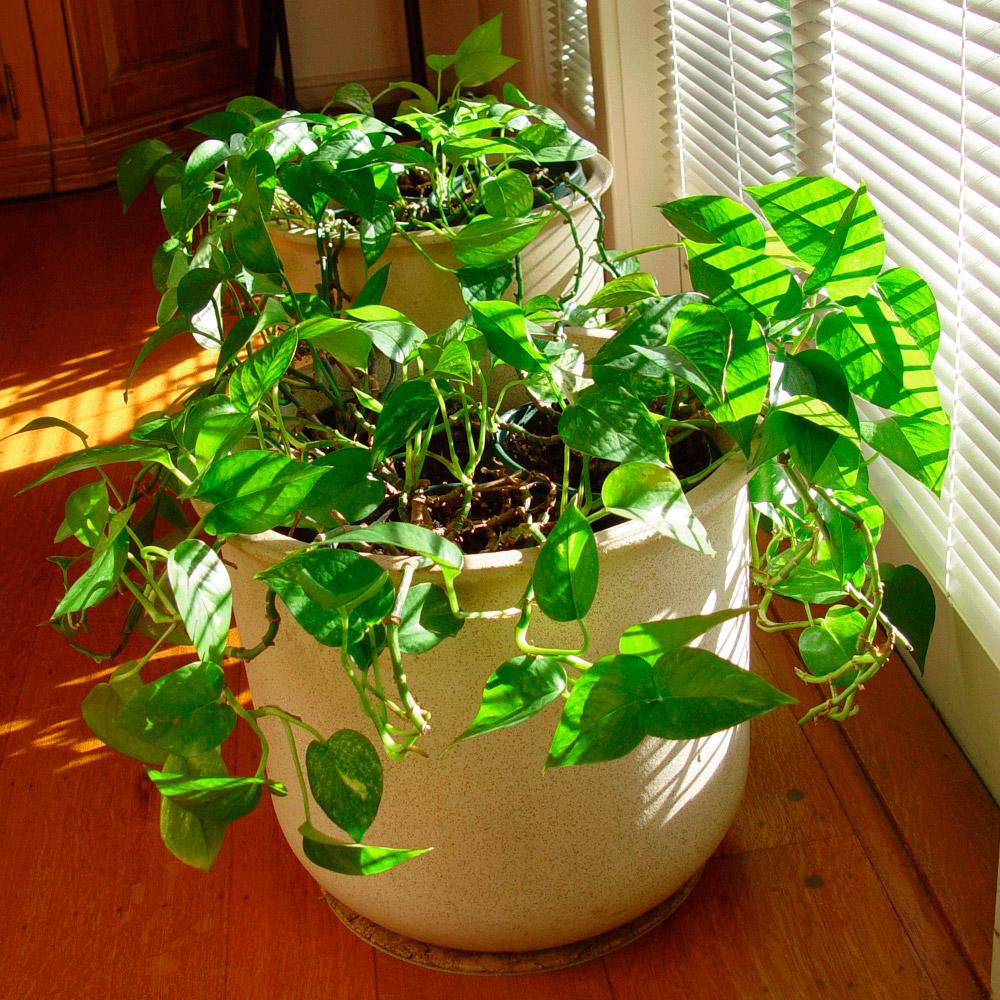 Plantas de interior  Florpediacom