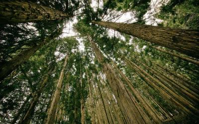 Hacia una ecología social sentipensante: el potencial terapéutico de la ayahuasca mas alla del individuo