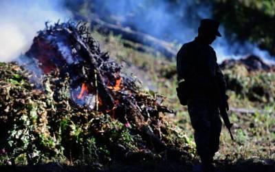 Consecuencias Socio-Ambientales por la Erradicación de Plantíos Ilícitos
