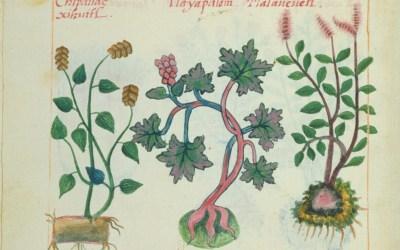 Un Recorrido Histórico de la Literatura sobre Plantas Sagradas en México