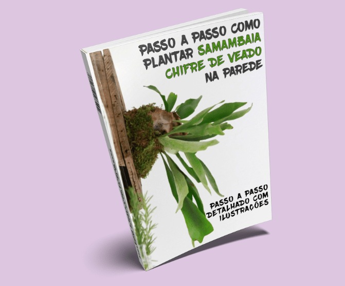 planta samambia