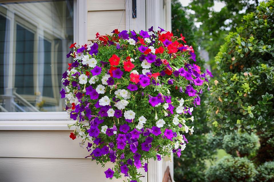 Petúnia plantas ornamentais para jardim
