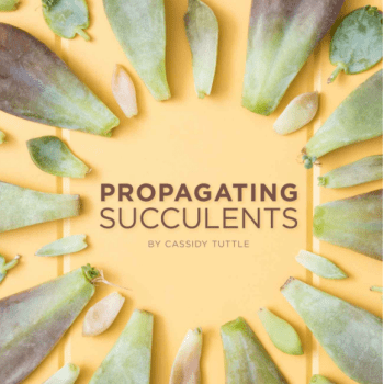 www.succulentsandsunshine.com
