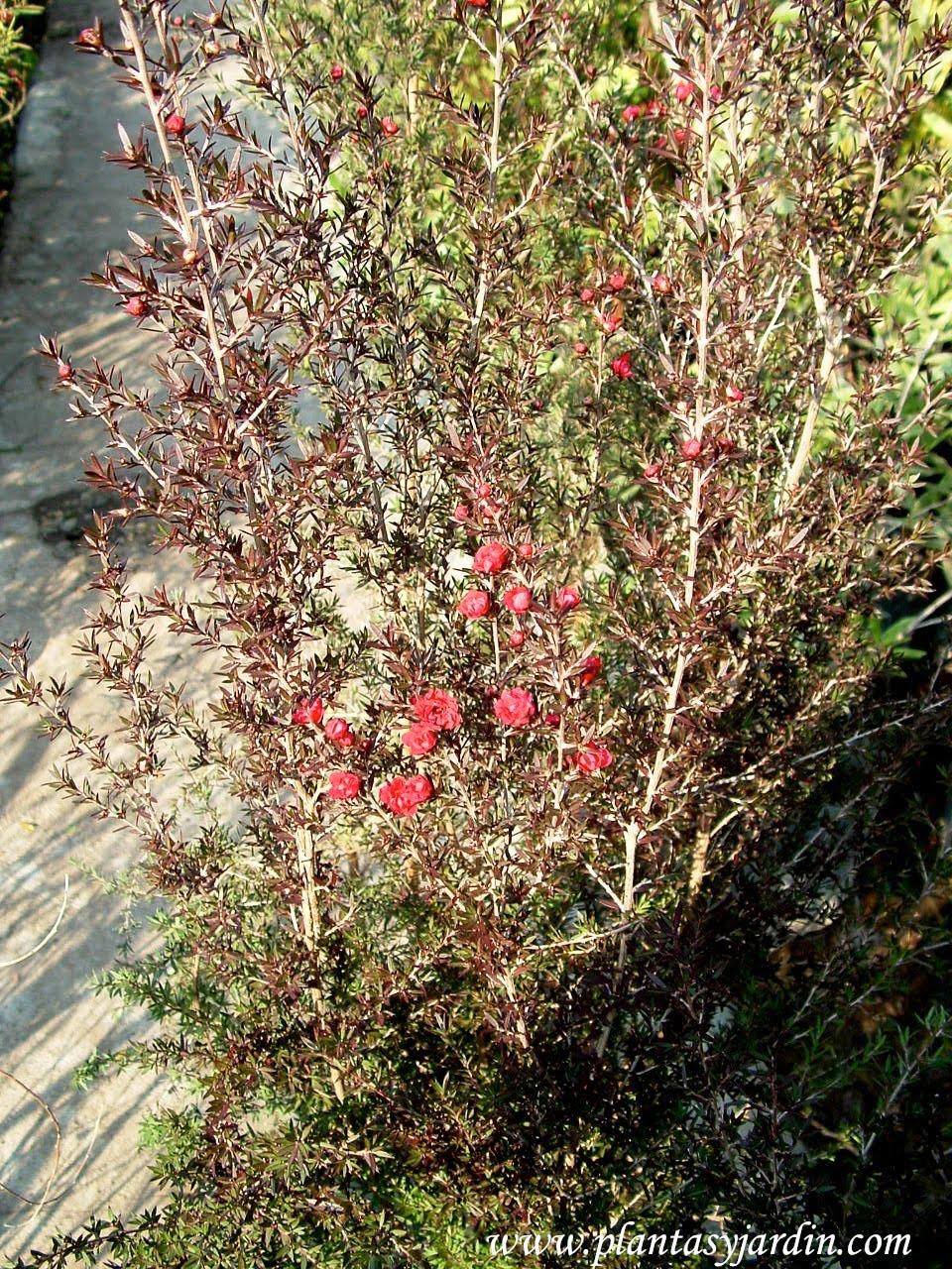 Arbustos Con Flor Porche De La Casa Blanca Con Arbustos