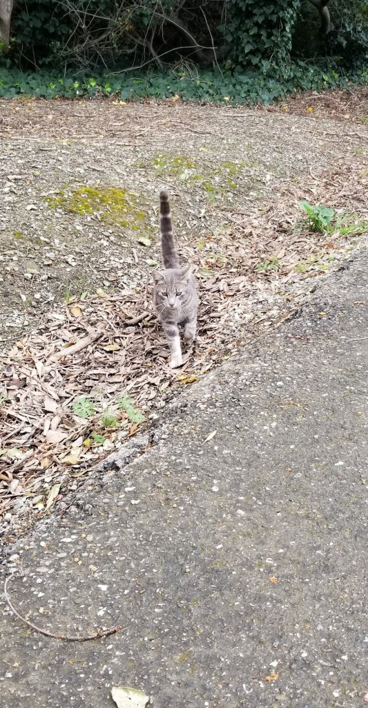 Small gray cat outside