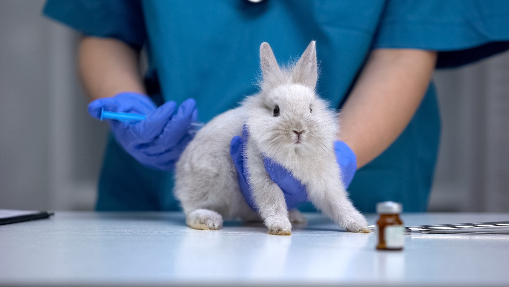 China 'Signals' Possible End Of Animal Testing For Imported 'Ordinary' Cosmetics In 2021