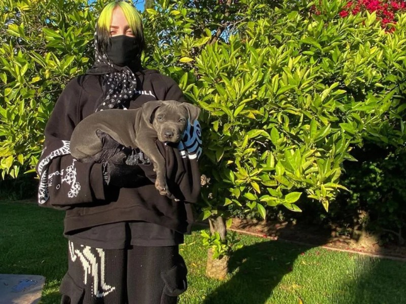 Billie Eilish adopted her foster puppy earlier this year
