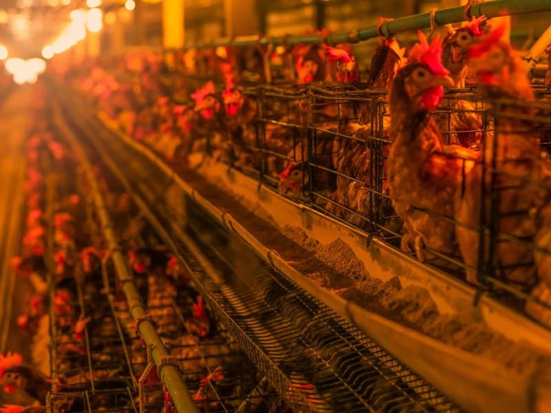 World Leaders Urged To 'Stop Ignoring Root Cause Of Pandemcs' And Address Risks Of Factory Farming