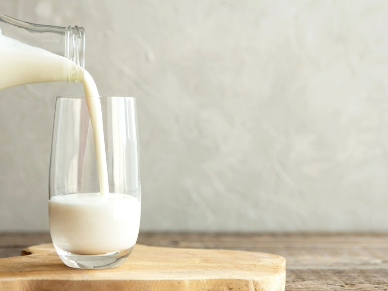 Nutritionist Slams 'This Morning' For Claiming Horse Milk Has 'Endless Health Benefits'