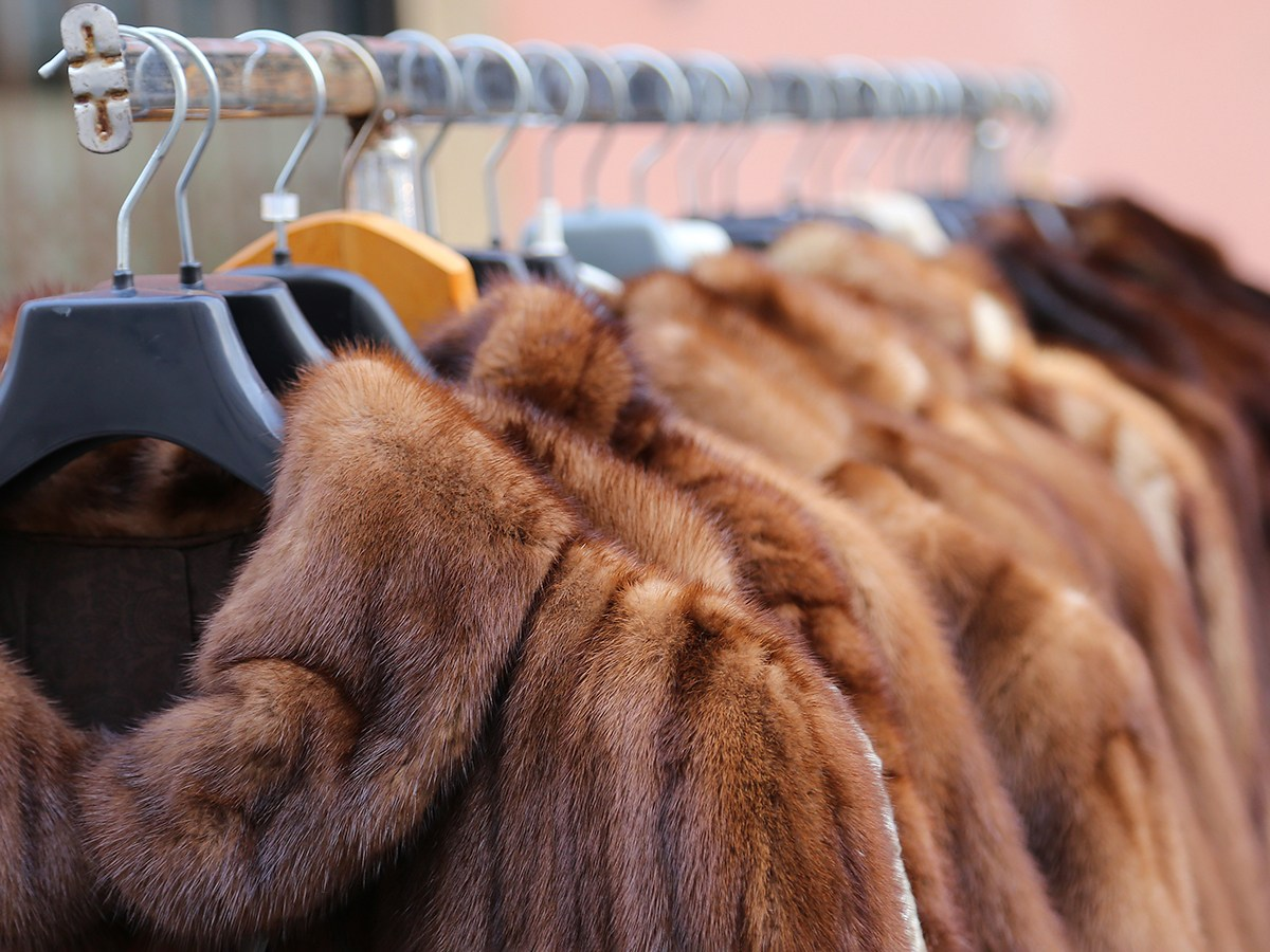 Designers Including Stella McCartney And Vivienne Westwood Urge UK Prime Minister To Ban Fur Sales