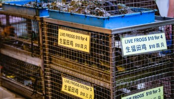 WHO Urges Food Markets To Ban Sale Of Live Animals