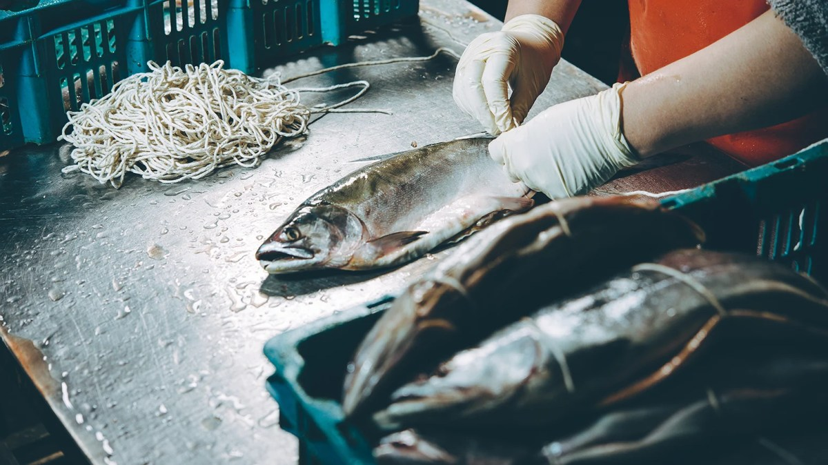 Oceana Says 'Abstaining From Seafood Is Not A Realistic Choice'- Seaspiracy Directors Respond