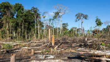 Amazon Rainforest Now Emits More CO2 Than It Absorbs For First Time