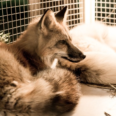 UK government debates ban on fur sale and import