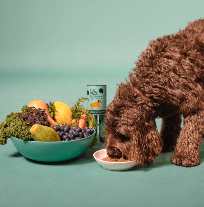 Plant-Based Dog Food Brand Champions Pet And Planet's Health