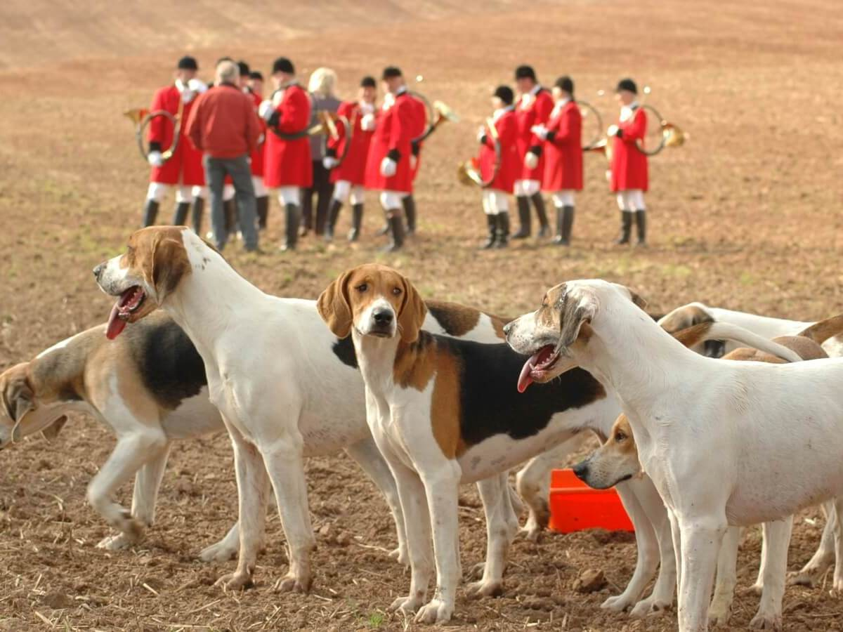 Hidden Camera Footage Shows Dogs Being Shot Dead At Hunt Kennels
