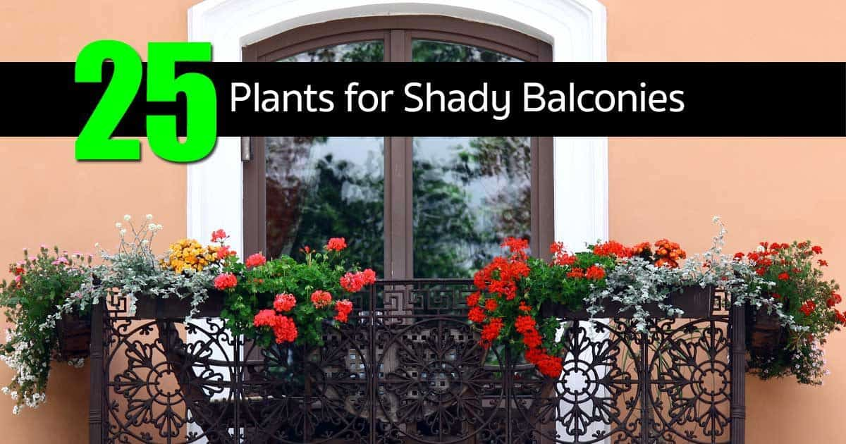 25 Plants for Shady Balconies