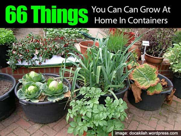 66 Things You Can Grow At Home In Containers