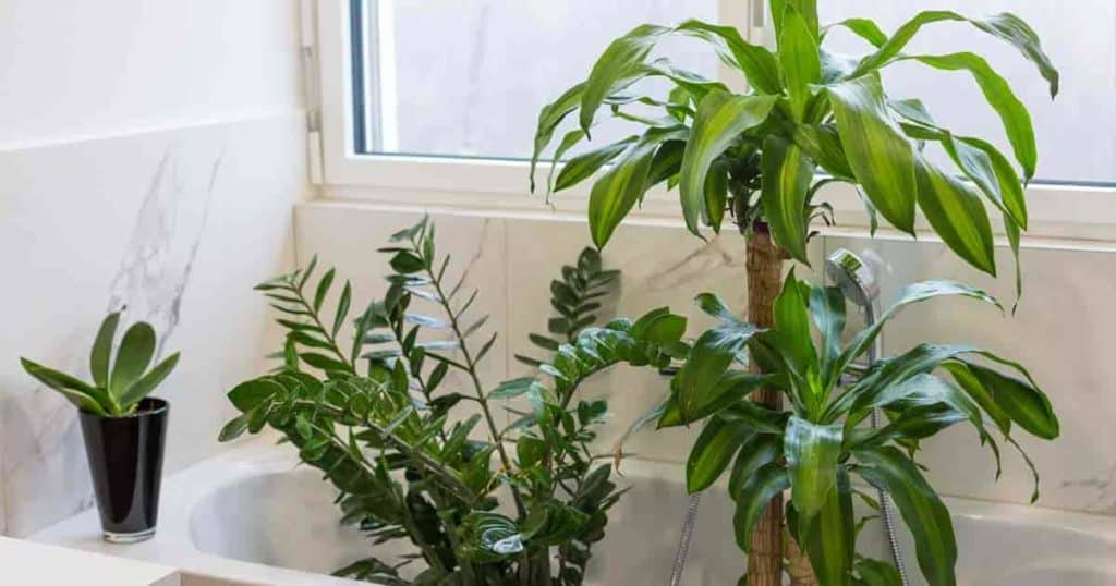 17 Best Bathroom Plants How To Use and Choose Low Light