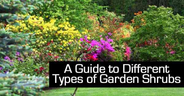guide types of garden