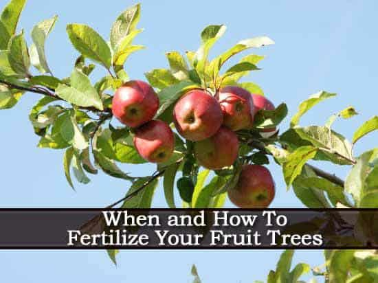 When And How To Fertilize Fruit Trees