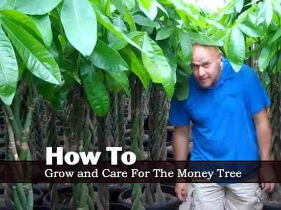 money-tree-2-042813