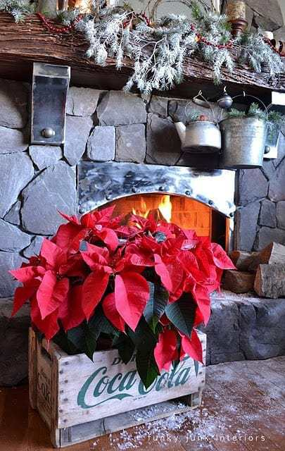 Poinsettia Images Collected To Celebrate National