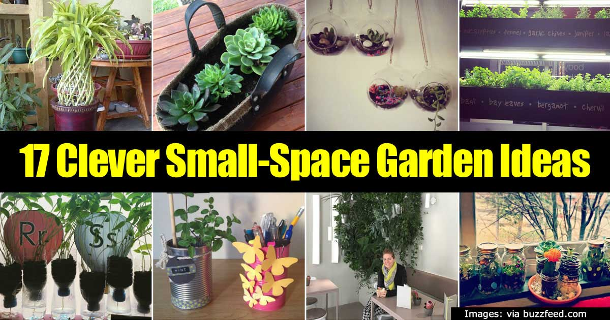 17 Clever Small Space Garden Ideas