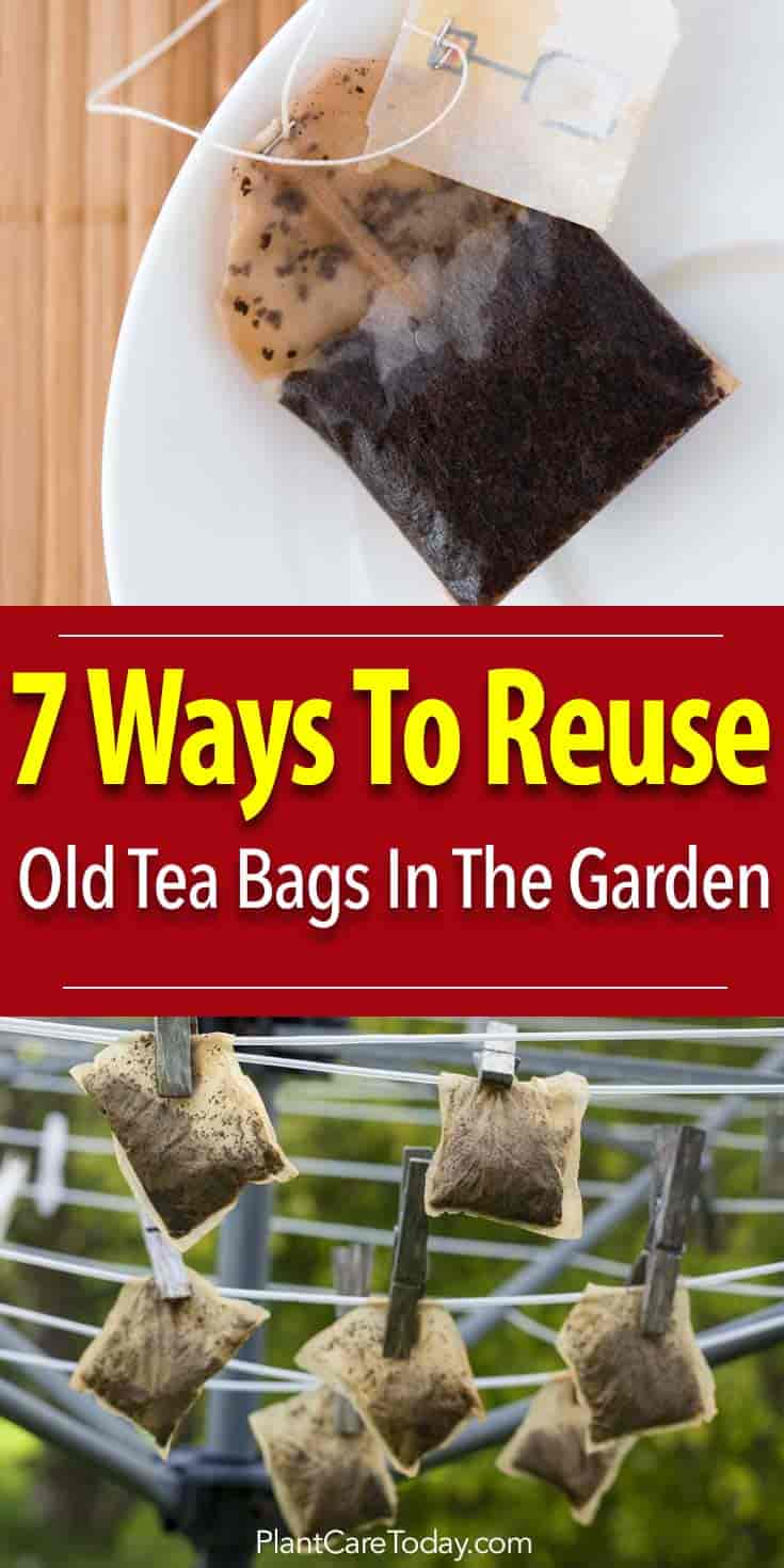 kitchen garbage can storage carts with wheels 7 ways to reuse old used tea bags in the garden, #3 brilliant!