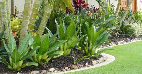 tropical landscaping design - create