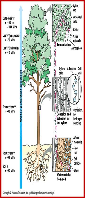 sap r 3 modules diagram bt telephone wiring sockets tree 10 stromoeko de ascent of rh plantcellbiology masters grkraj org gl