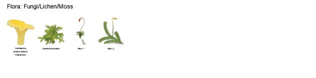 Fungi, Lichen, Moss: Free botanical sets of icon illustrations