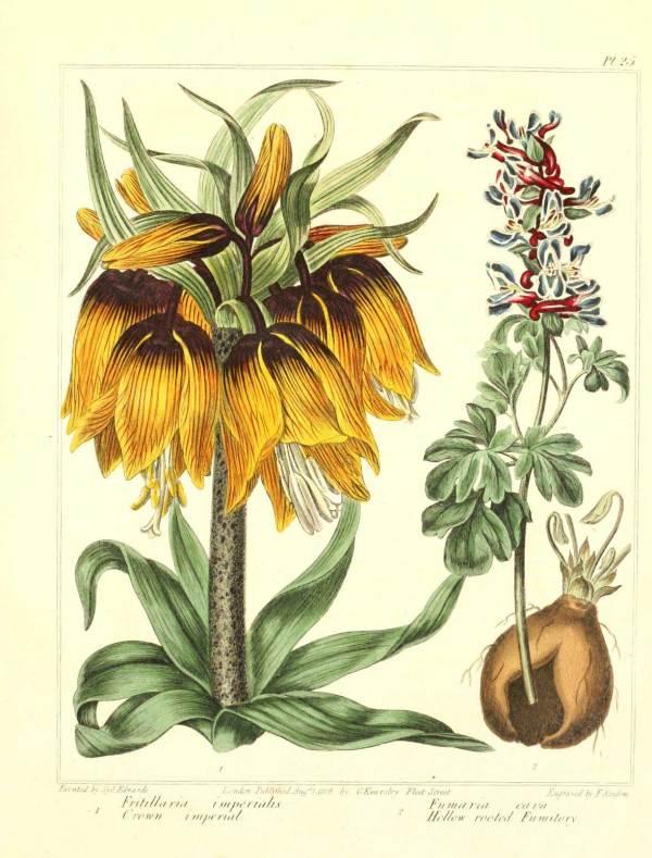 Free Vintage Retro Botanical Art