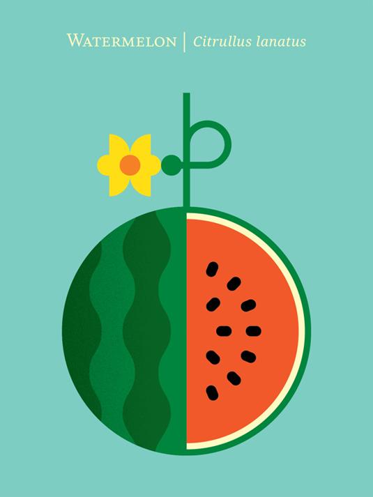 Fruit Illustration Design