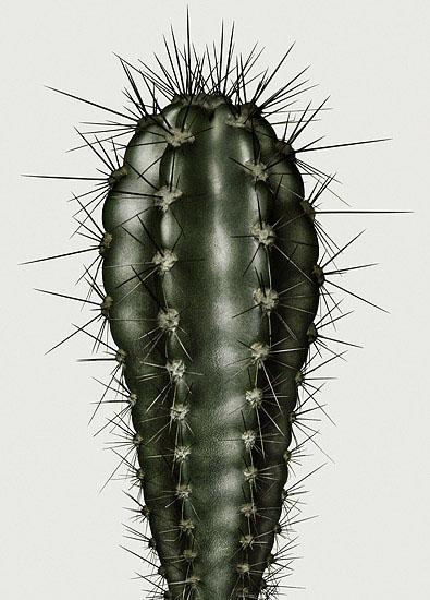 Peter Lippmann Cacti
