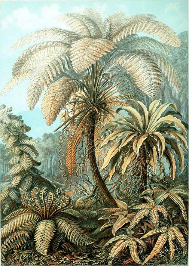 natural history art