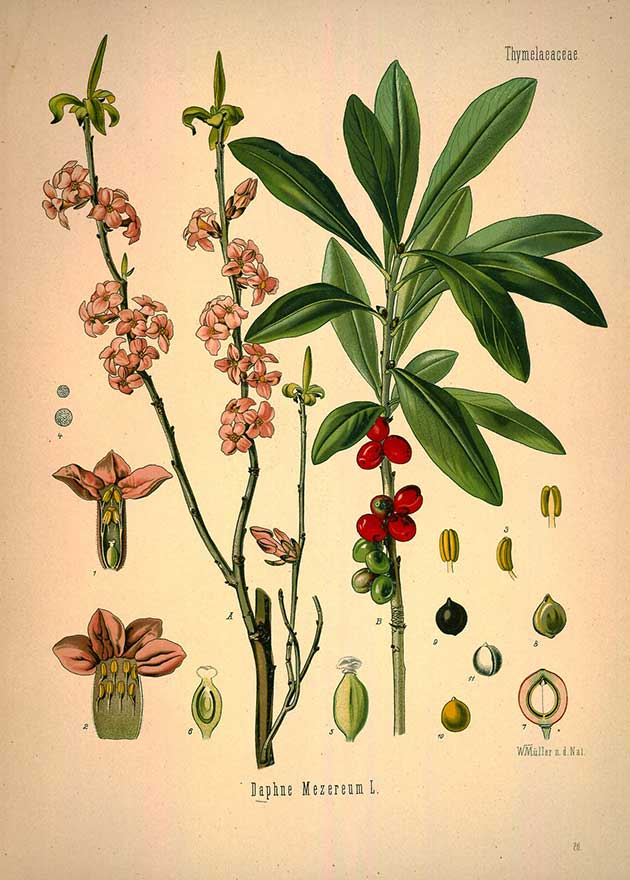 Medicinal Botanical Plants