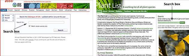 Plant name authorities