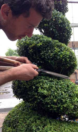 Tom doing topiary