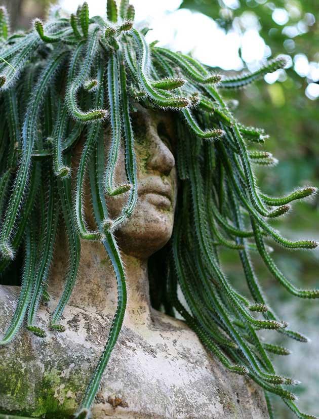 Botanical plant and art photographer