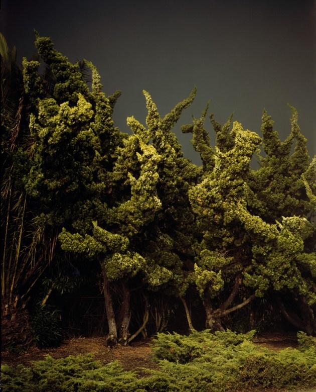 Amanda Friedman Night Landscapes trees